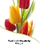 Memoriam Cards Mixed Tulips
